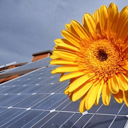 Solarpanel_Sonnenblume