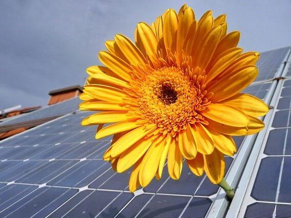 Photovoltaikanlage auf Dach und Sonnenblume